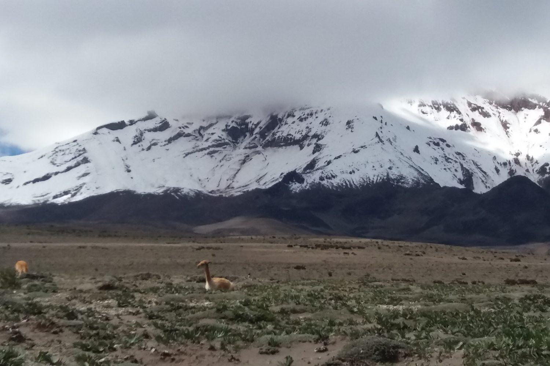 Climbing Tours to Refuge Chimborazo one day | Details