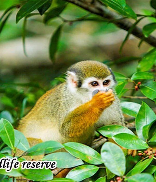 Cuyabeno Amazon Jungle Tours 3 days
